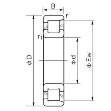 260 mm x 500 mm x 80 mm  NACHI NF 256 roulements à rouleaux cylindriques